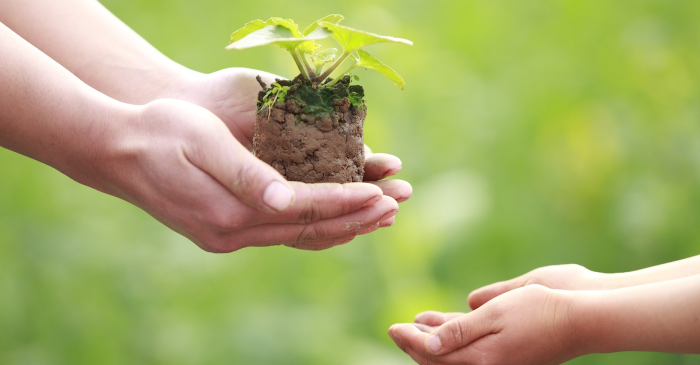 Plant a seed & see what grows foundationHow to Donate to Your ...