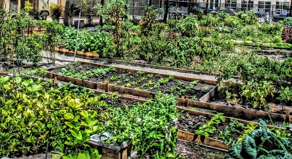 how to start a community garden in your neighborhood