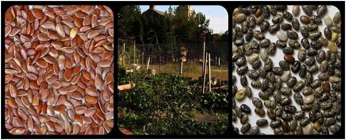Seed Preservation Methods