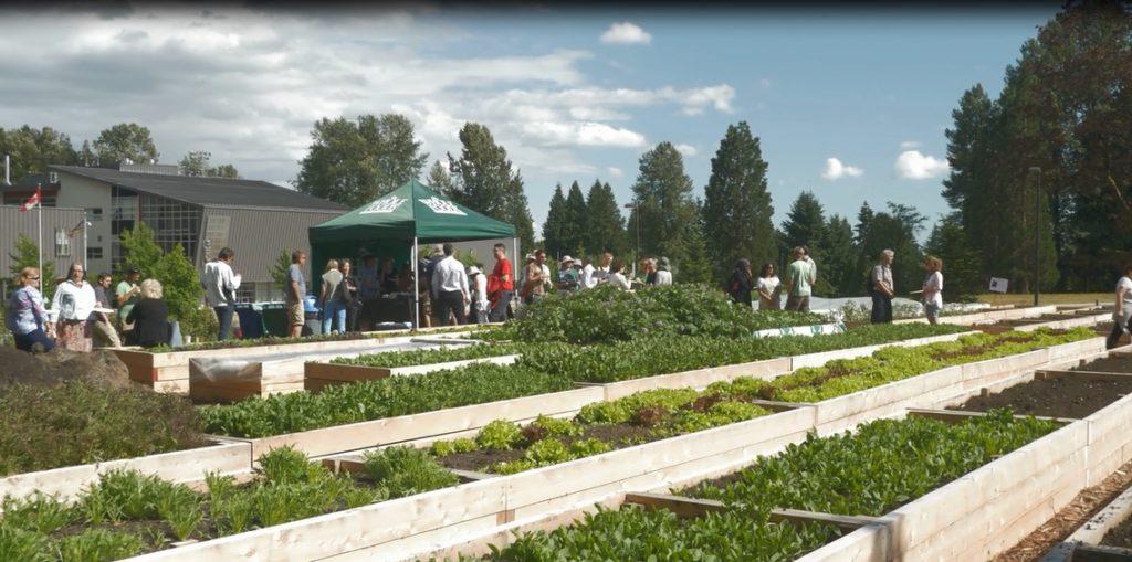 Sutherland Secondary Schoolyard Market Garden