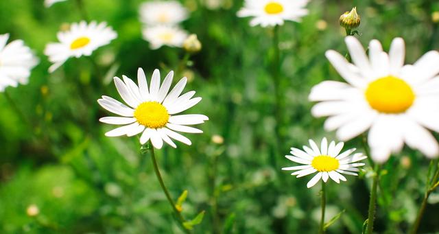 Helpful-Herbs-To-Grow