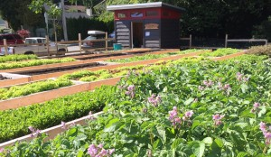 Sutherland Secondary School Community Garden