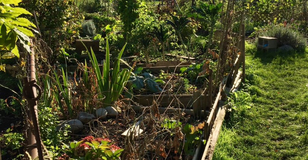 How to Brighten Your Community Garden