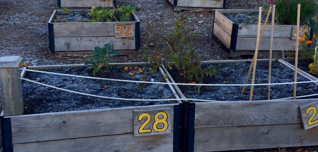 Best Plants & Vegetables to Grow in Cold Weather for Your Urban Garden
