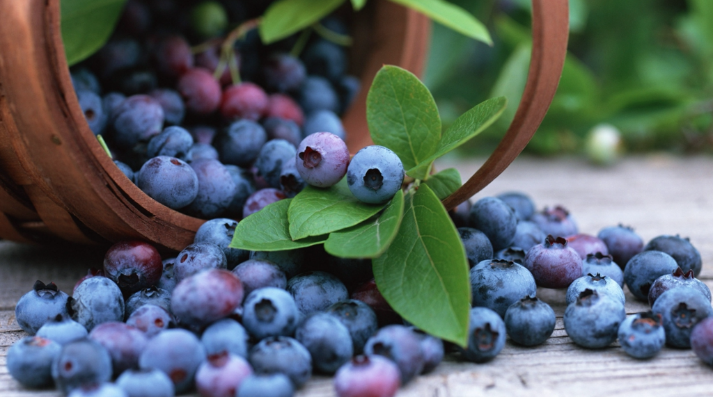 Grow-Your-Own-Antioxidants-Blueberries