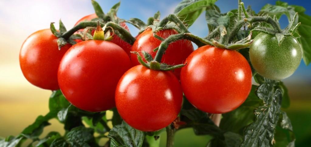 Grow-Your-Own-Antioxidants-Tomatoes