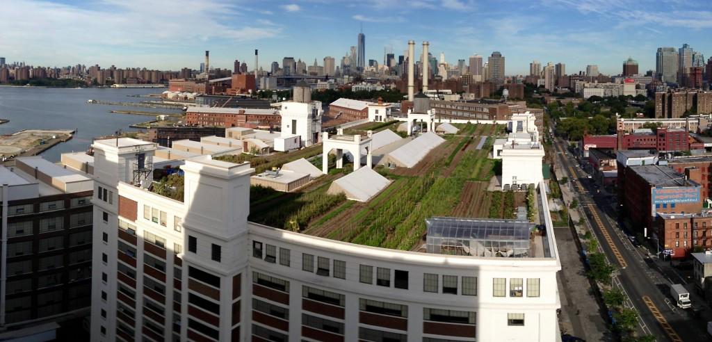 Unique-Urban-and-Community-Gardens-Roof