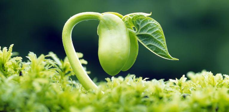 Green Gardening Tips
