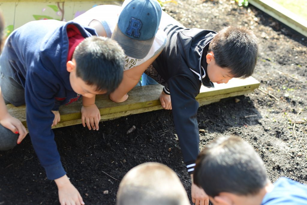 Students planting seeds