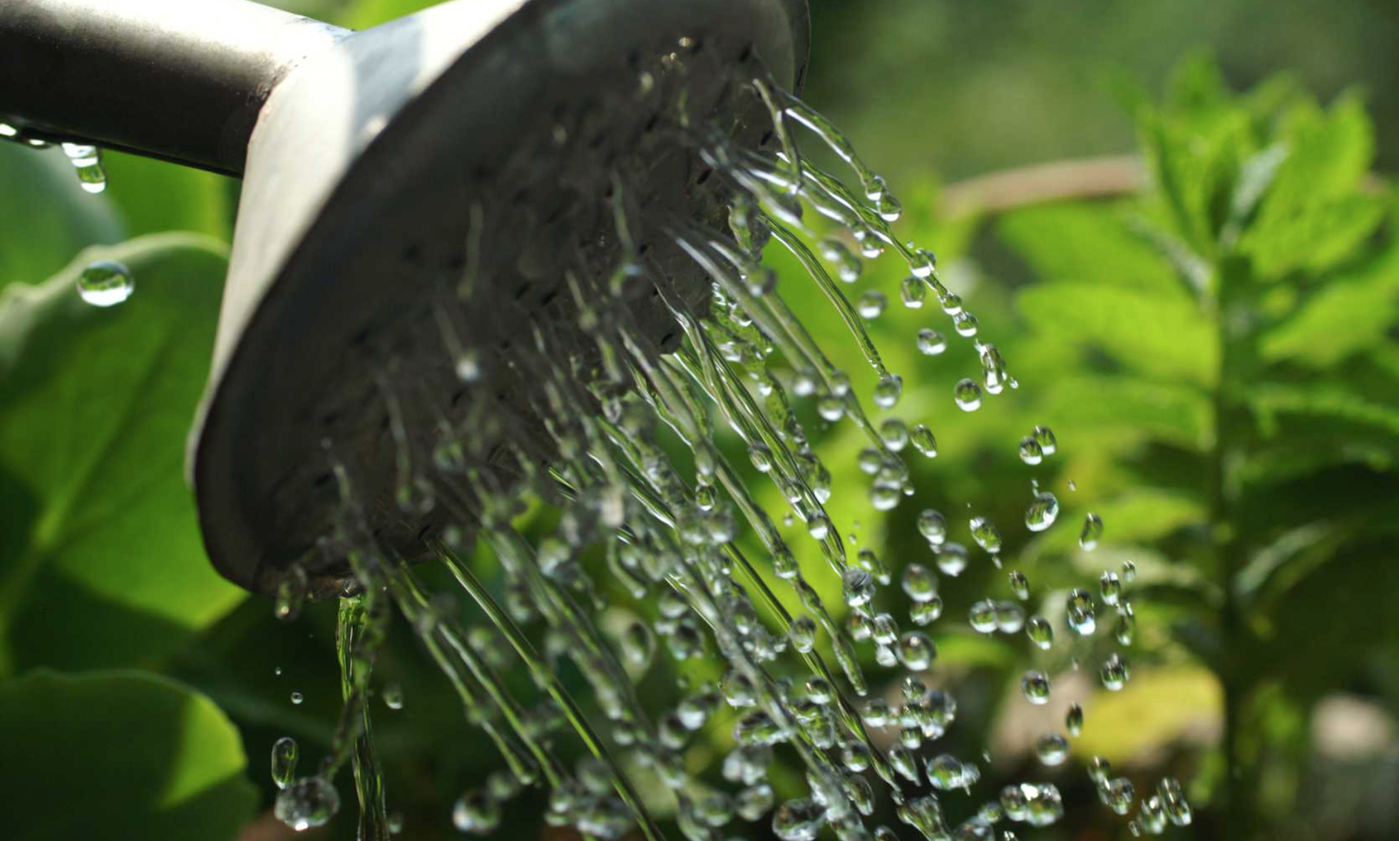 How to Conserve Water in Your Community Garden