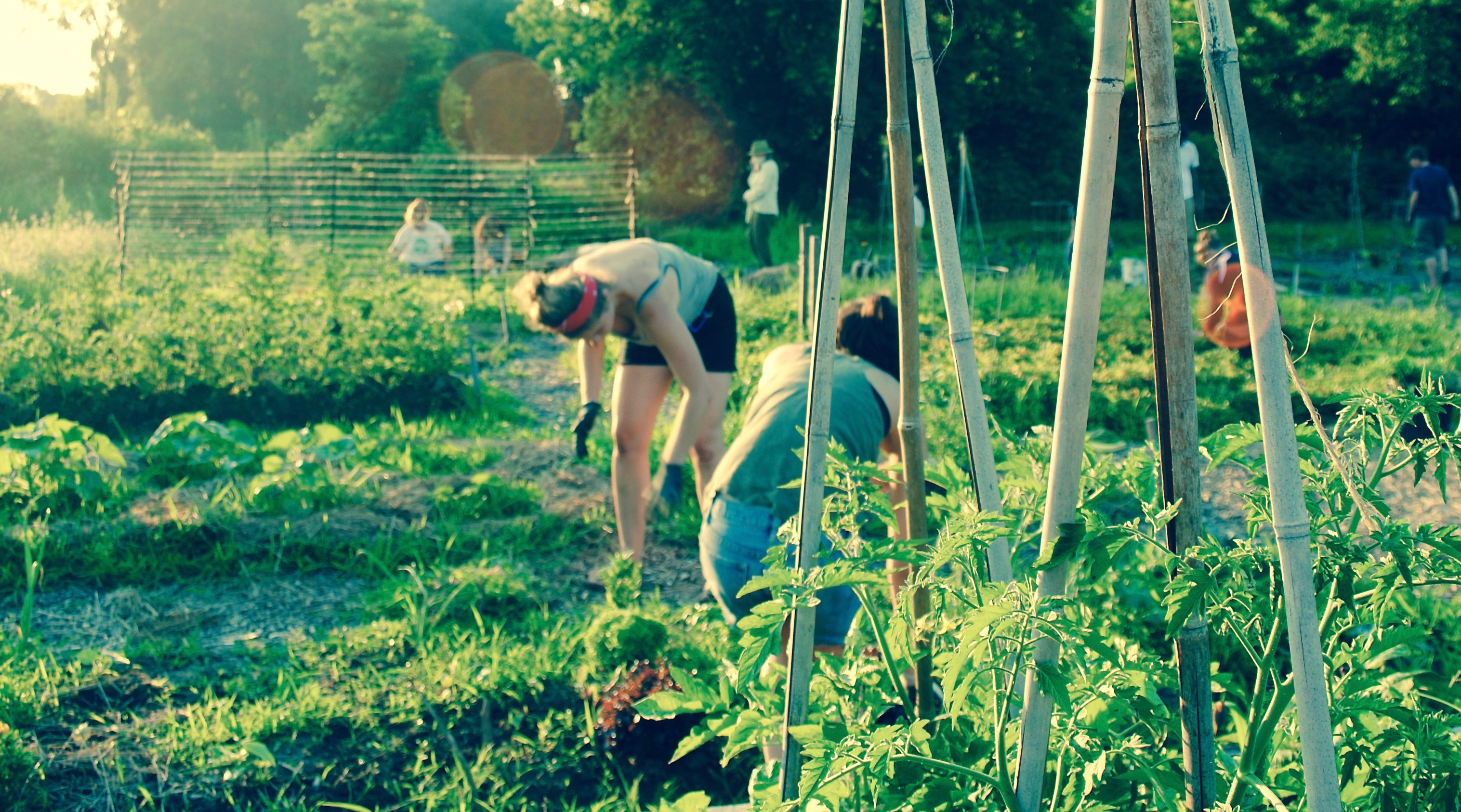 How to Turn Your Community Garden into a Learning Garden Too
