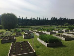 Raised garden beds of Factors Farms, Armstrong, BC Canada