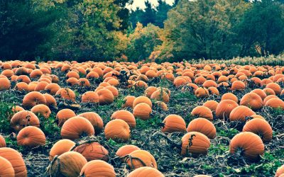 How to Use Pumpkins to Teach Kids About Food Security