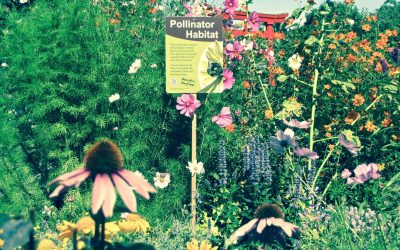 How to Make a Pollinator Garden