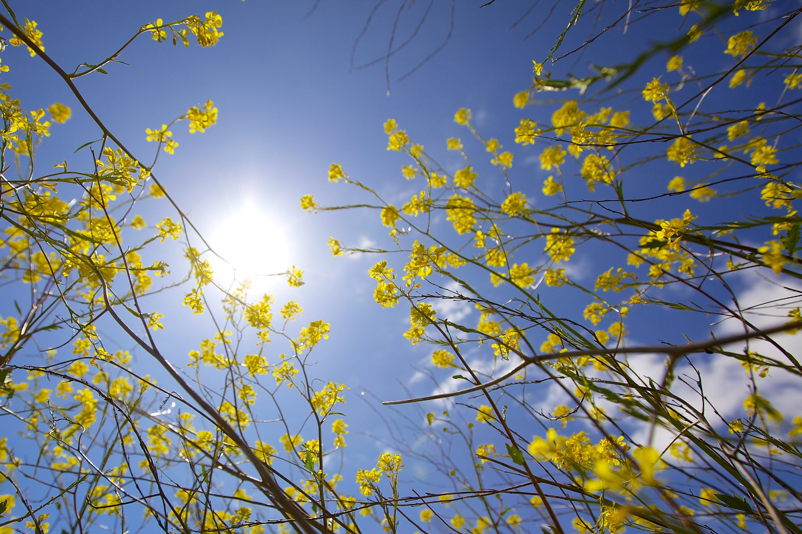 Yellow flowers against the sun