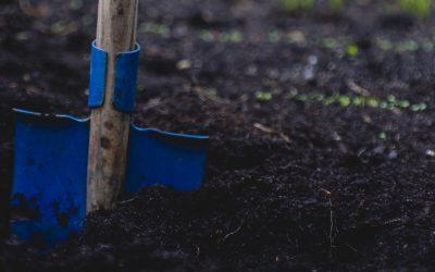 6 Great School Garden Examples to Inspire Your Own