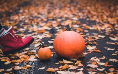 What to Do With Used Pumpkins – Learning Projects for Your Kids