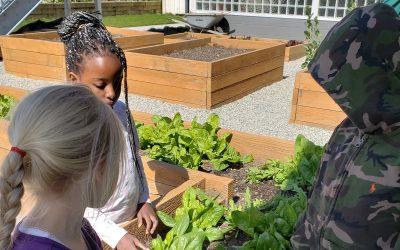 Deer Lake School Garden – A Budding Success