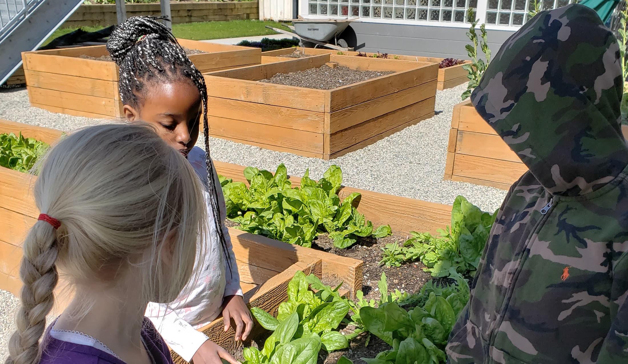 Deer Lake School Garden - A Budding Success