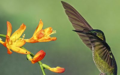 Top 10 Coolest Wildlife Pollinators for Kids to Discover