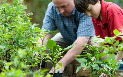 Celebrating Garden Days Canada 2021